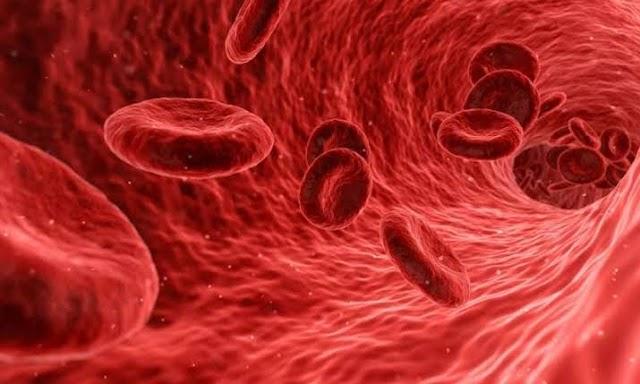 मानव रुधिर Human Blood