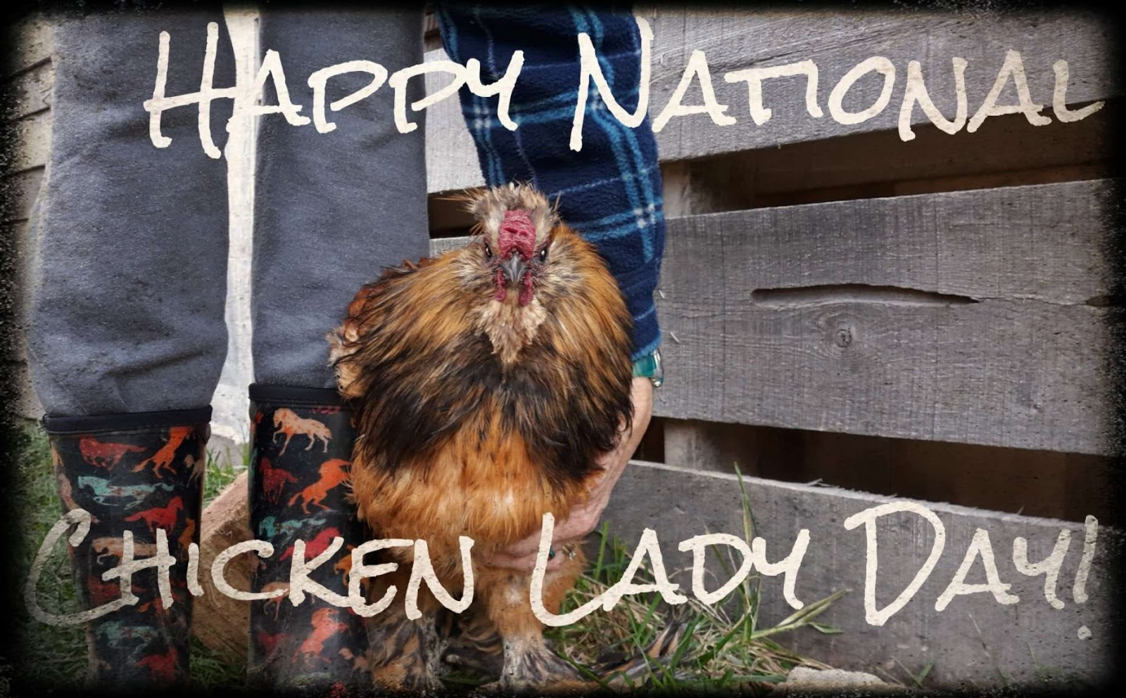 National Chicken Lady Day Wishes for Whatsapp
