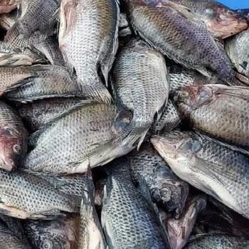 शीलन मासा, Basa fish name in Marathi