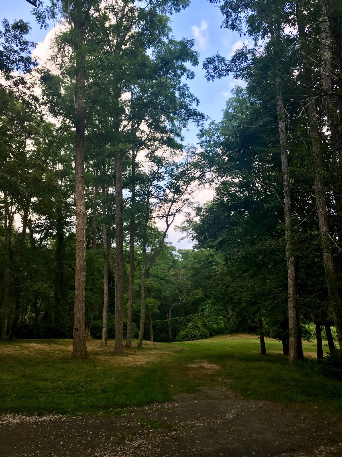Trees and sky in Cape Cod, USA