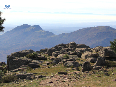 Zonas menos matorralizadas de la alta montaña como esta sirven de hábitat al acentor alpino.