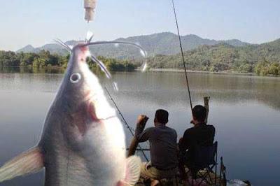 Tìm vị trí và làm mồi câu cá ngạnh, nheo hiệu quả cao