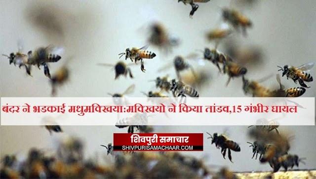 बंदर ने भडकाई मधुमक्खिया: शव को दफनाने जा रहे थे लोग, अब डॉक्टर के पास