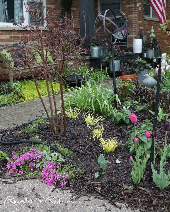 Spring garden tour that showcases some gorgeous seasonal color using tulips, phlox and purple foliage.