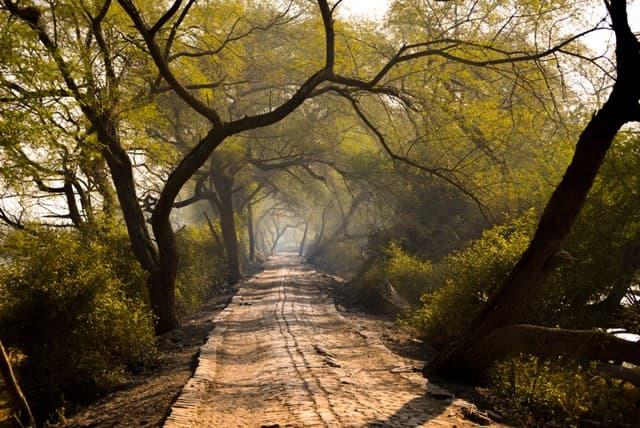 Flora Of Kumbhalgarh Wildlife Sanctuary