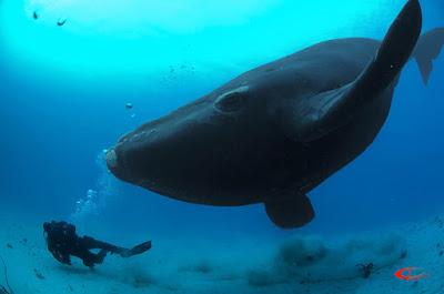 Язык кита тяжелее слона. 40 интересных фактов, которые могут ... | 265x400