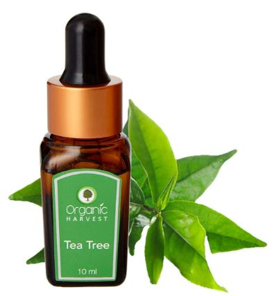 Organic Harvest Tea Tree Essential Oil, 100% Organic, Paraben & Sulphate Free - 10ml