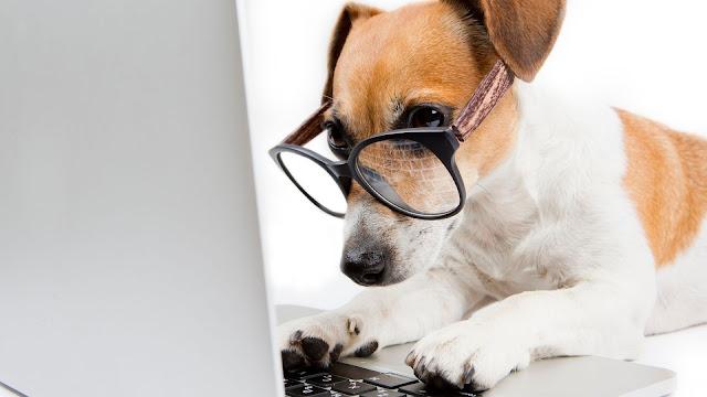 cachorro com oculos e as patas em um notebook