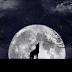 Os lobos realmente uivam para a lua?