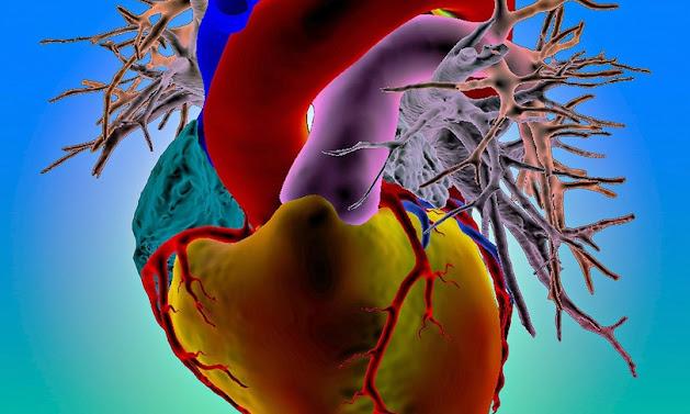 Al Cardiocenter dell'ospedale Niguarda di Milano un intervento al cuore mai fatto in Italia