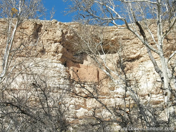 Montezuma Castle, near Camp Verde, Arizona, is seen through the white branches of leafless, winter cottonwoods.