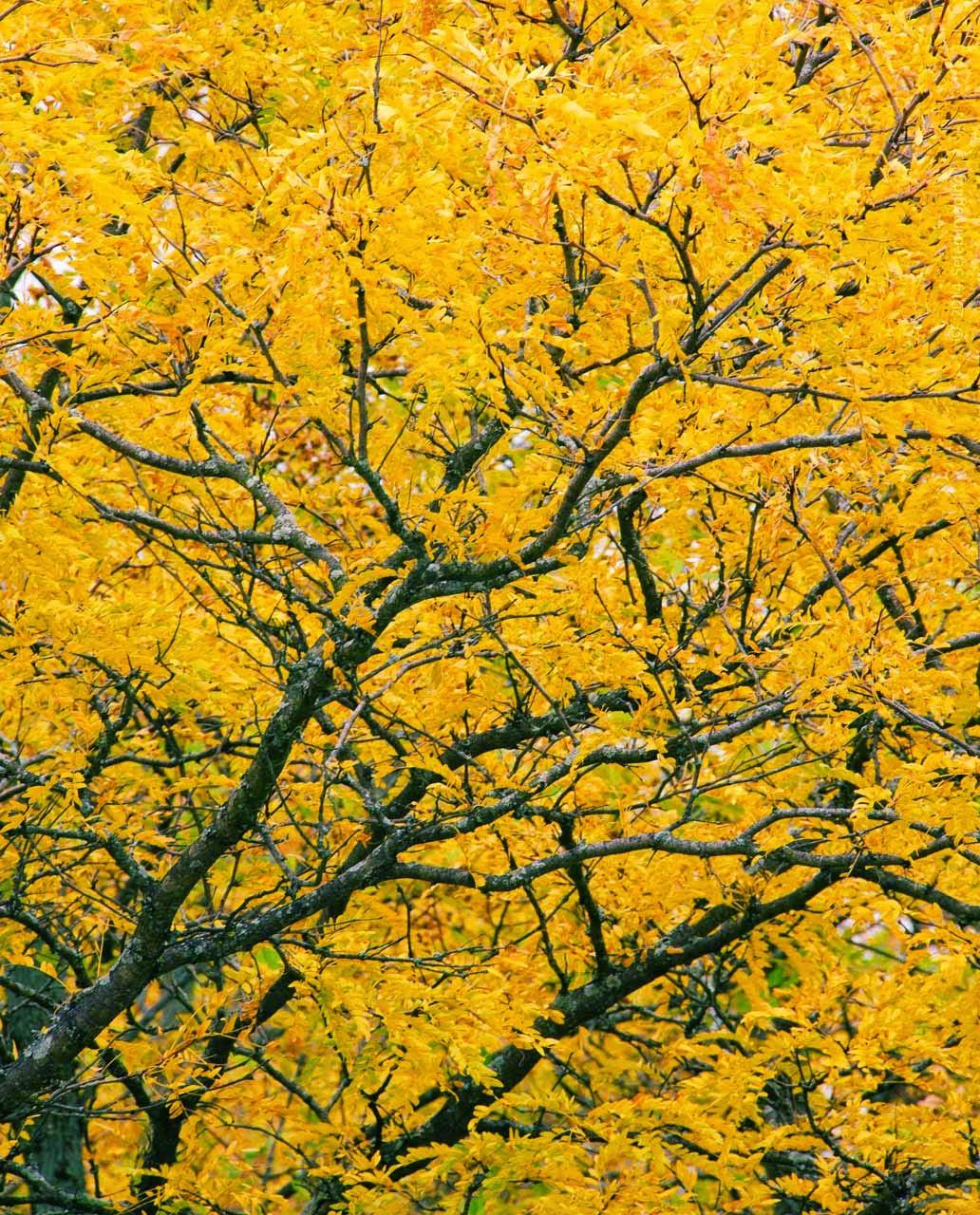 autumn fall foliage by Jeanne Selep