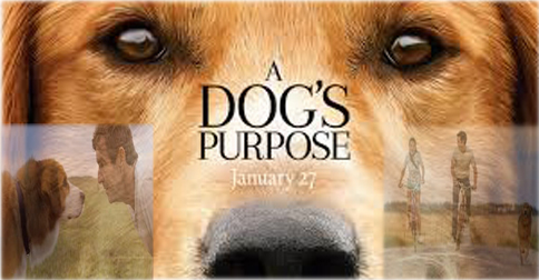 A Dog S Purpose Full Movie Free Download