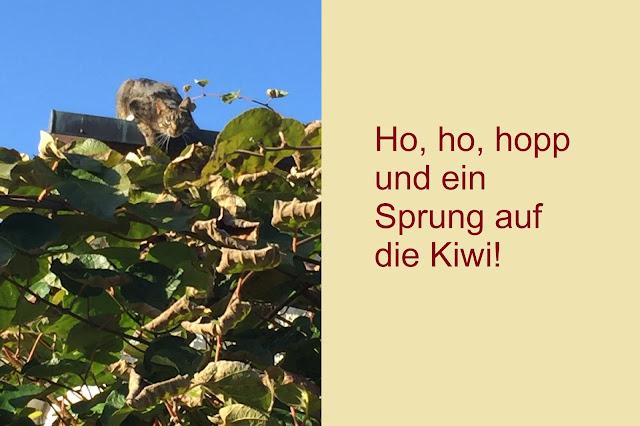 Katze springt auf Kiwi