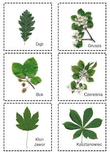 Przykłady liści 2