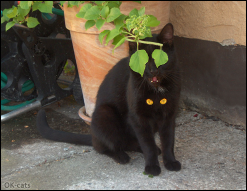 Photoshopped Cat picture • Don't mess with black cats, they have magic orange eyes