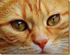 El cerebro artificial de Google aprende a identificar la imagen de un gato.