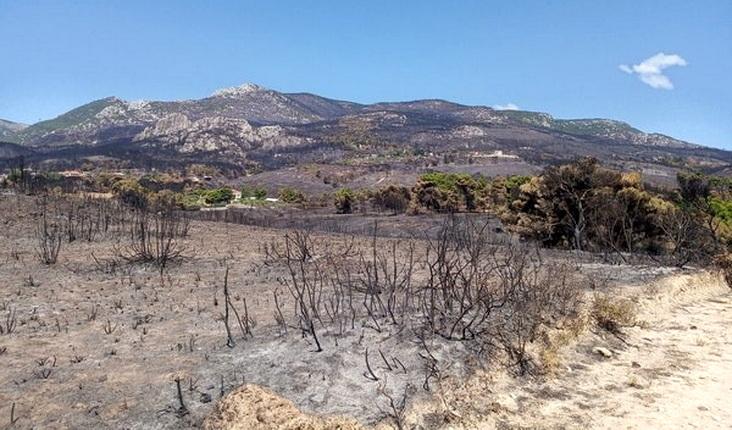 Πυρκαγιές: Η επόμενη μέρα