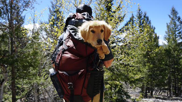 Hiking carrying a dog