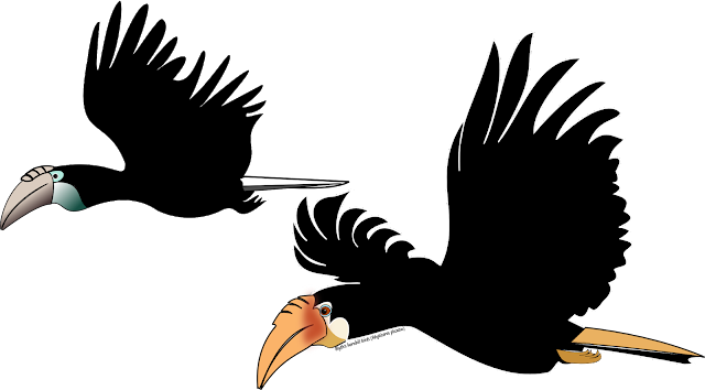 vector drawing of blyth's hornbill