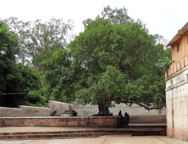 Entrance of the Mahakuta Temple Complex - Peepal Tree