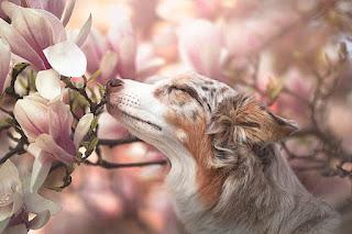 صور ورد زهور رائعة منوعه
