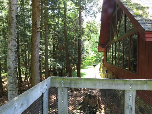 Hartwick Pines - Michigan, USA