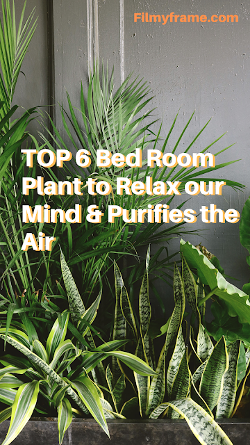 TOP 6 Bed Room Plant to Relax our Mind & Purifies the Air