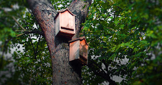Two brown bat houses hanging high up on the trunk of a tree. You can see leaves in the background.