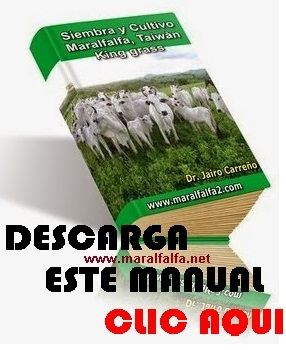 Pasto De Corta Maralfalfa
