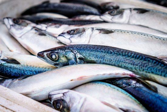 Ceará é primeiro do País no ranking de exportação de pescados