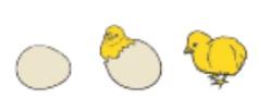 gambar ilustrasi telur ayam menetas