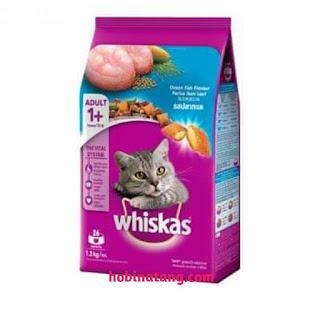 Cara Mengobati Kucing Lemas Tidak Mau Makan