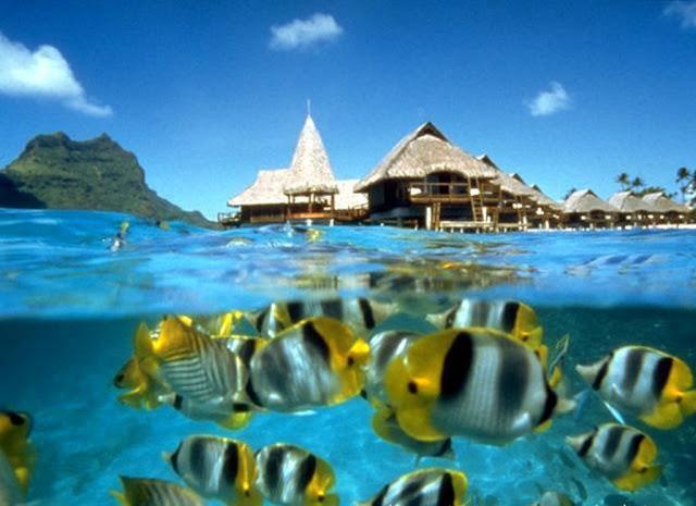 how to get to bunaken island, bunaken national marine park, wisata bunaken, bunaken adalah, bunaken island resort, bunaken miscrits, bunaken map, bunaken resort,