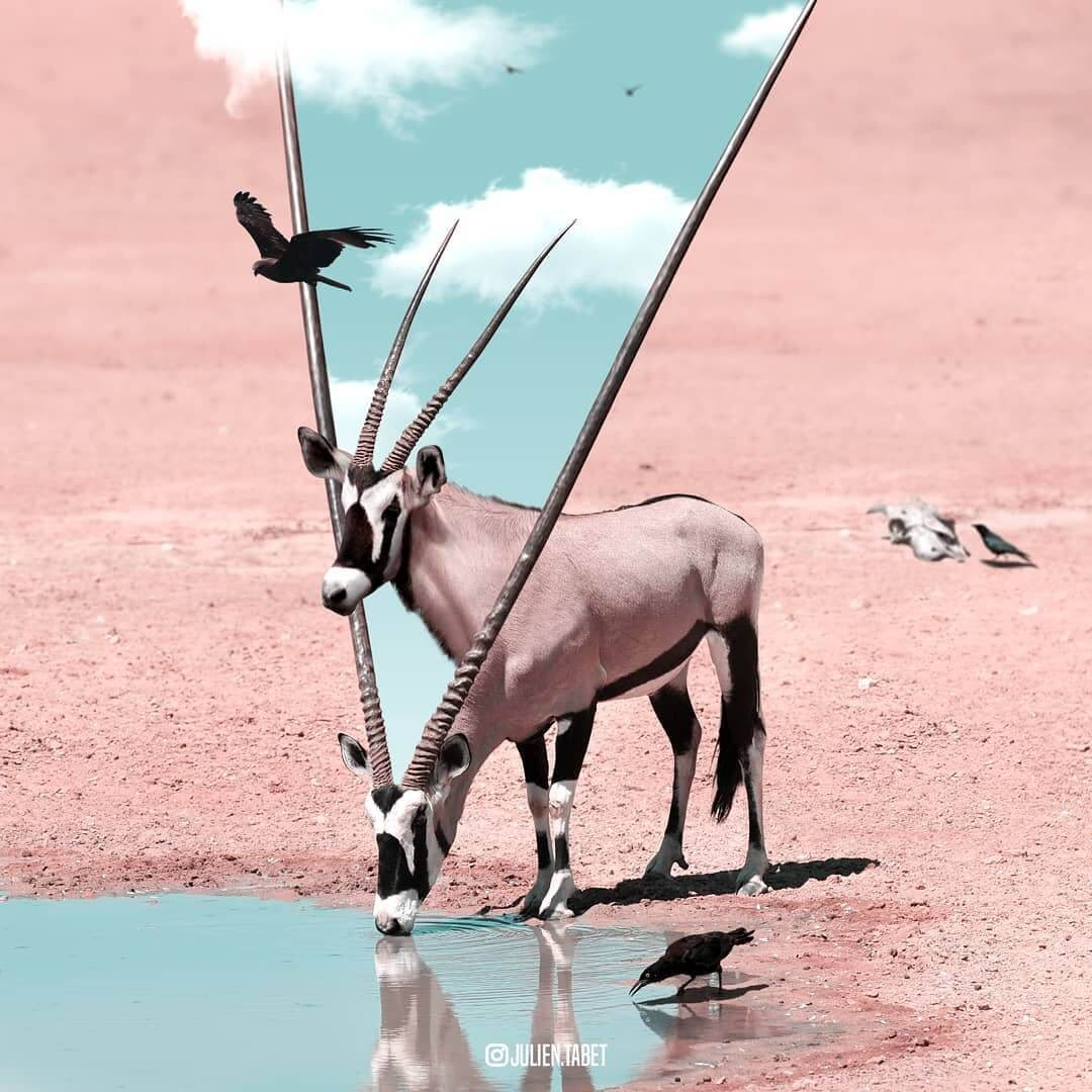 01-Double-Vision-Julien-Tabet-Surreal-Animal-Photo-Manipulation-www-designstack-co