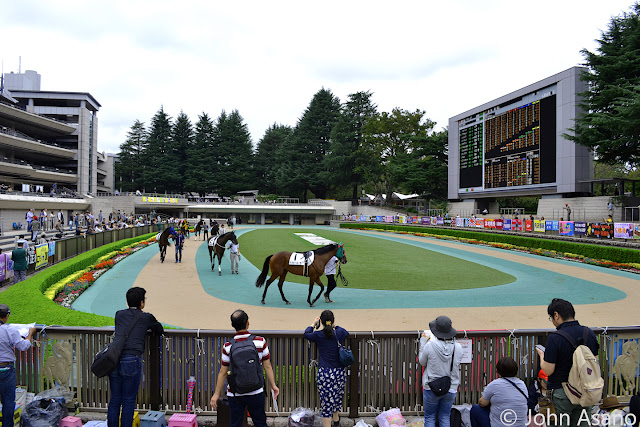 Horse Viewing in the Parade Ring