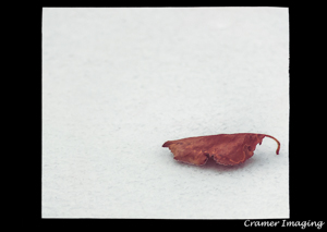 Cramer Imaging's photograph of one of our autumn leaf on snow photos matted in a contrasting tone or black mat