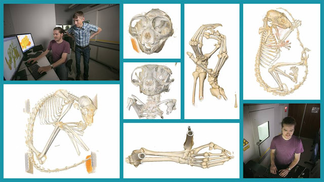 X-ray scanning immortalizes endangered primates in the digital afterlife, in 3-D