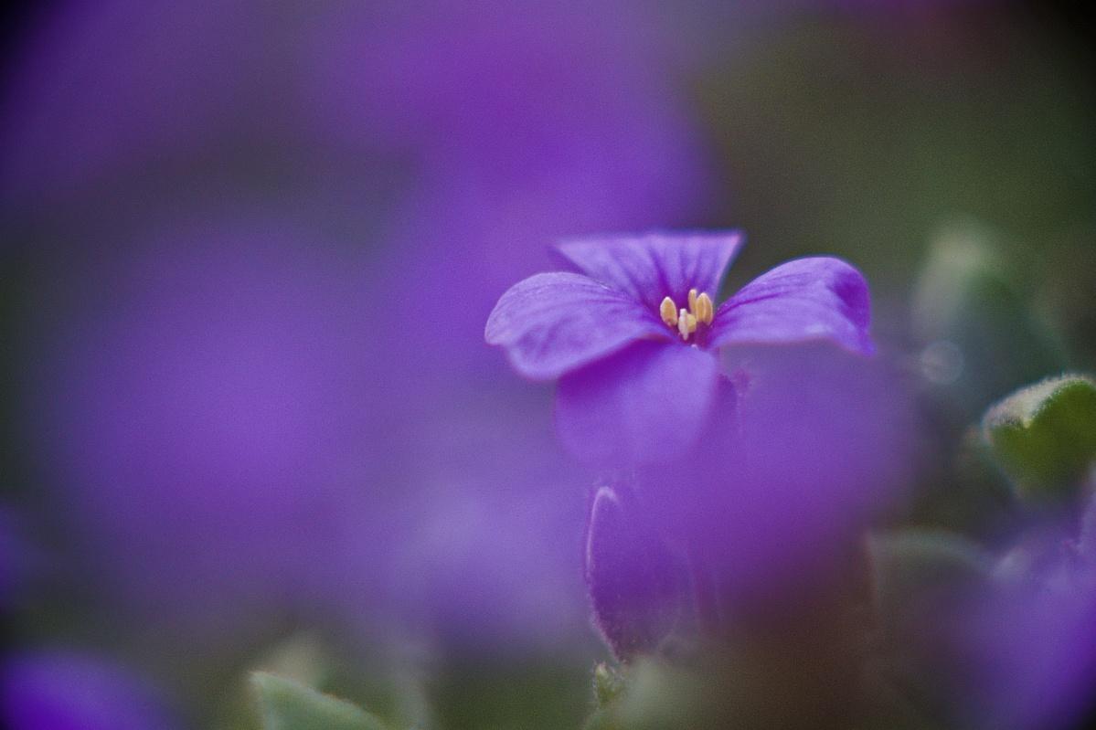 #315 WILL. WETZLAR MAGINON f2.8 100mm – Kleine Blume ganz groß