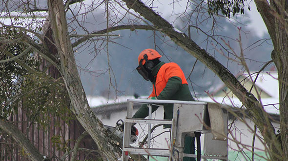 Tree disease treatments include carefully pruning out affected limbs and branches