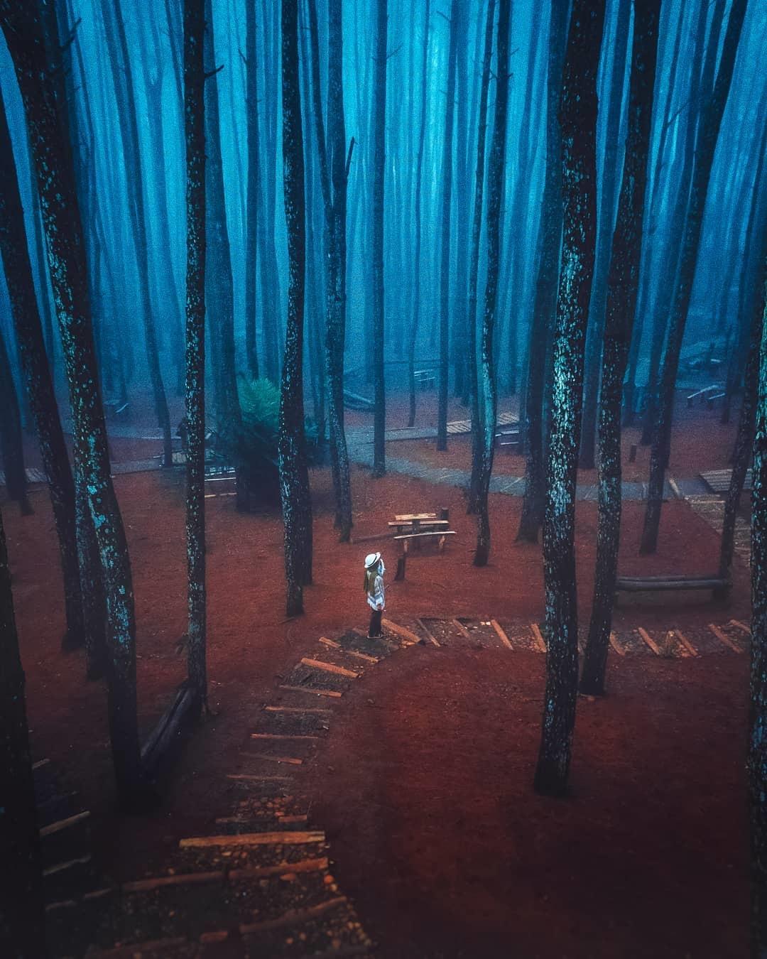 Hutan Pinus Mangunan Bantul Daerah Istimewa Yogyakarta