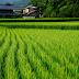 【米ぬかオイル(ライスオイル・こめ油)】日本人が誇りに思えるスーパーオイル、お米のオイルの効能・魅力を5つのキーワードで説明してみる。