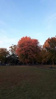 parc de Montréal, l'automne, feuilles colorées