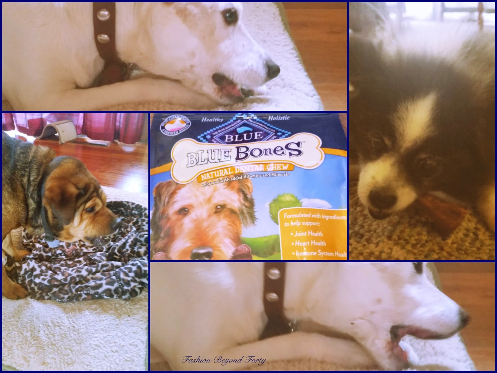 Pets and Dental Health Care with Chewy and Blue Buffalo