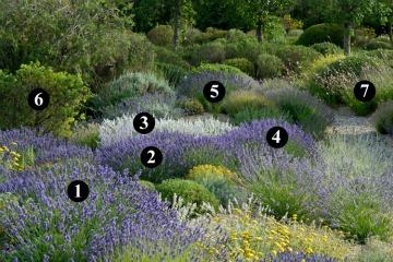 Jardiner a sostenible combinaciones de plantas Plantas jardin mediterraneo
