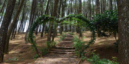 Fasilitas Yang Ada di Hutan Pinus Pengger Yogyakarta
