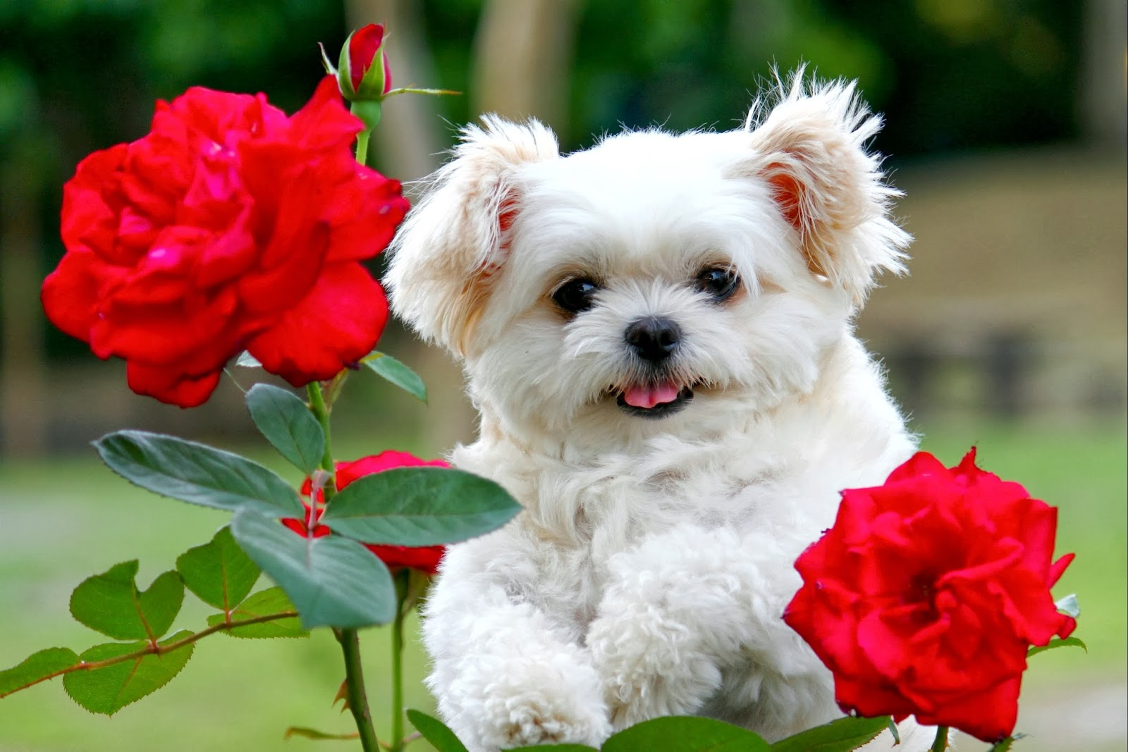 Beautiful Cute Puppies Wallpapers