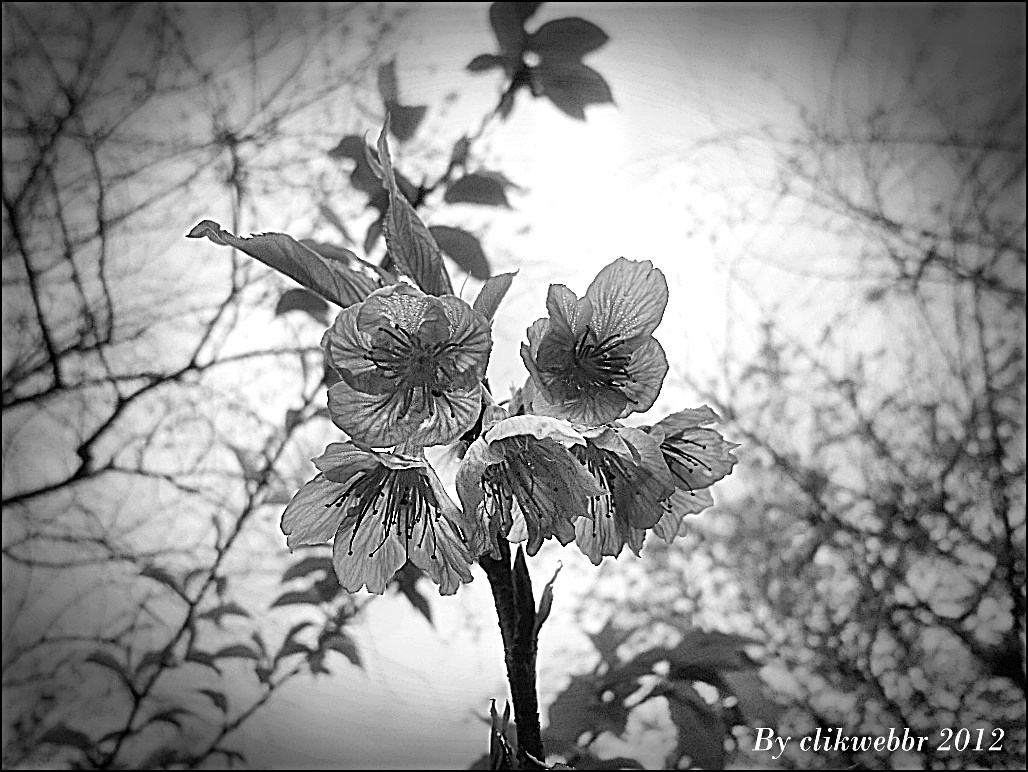 mundo das plantas flores em preto e branco