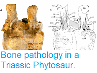 https://sciencythoughts.blogspot.com/2014/01/bone-pathology-in-triassic-phytosaur.html