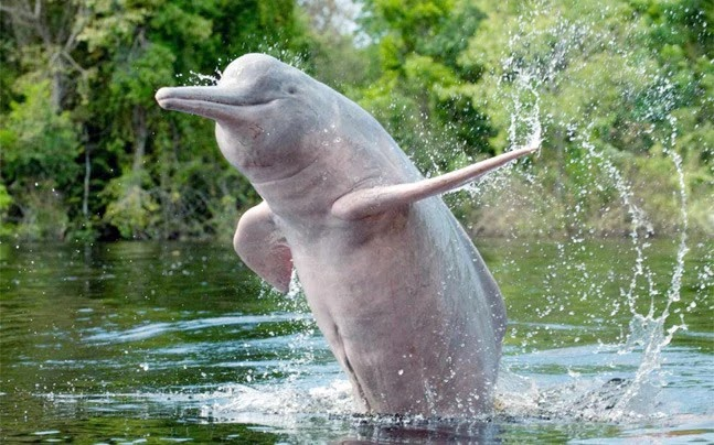 Ganges River Dolphins, Daily Current Affairs: 14th October 2019
